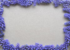 Top view of a brow kraft paper background with purple violet lavender spring bulb flowers for copy and text Stock Photography