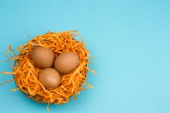Top view brown eggs in a decorative nest. On a vibrant blue background royalty free stock images