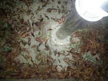 Brown leaves under electric light. A top view of brown leaves under electric light at night Stock Photos