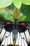 Top view of butterfly Stock Photos