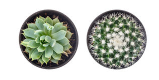 Top view of cactus Stock Photography