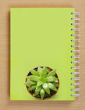 Top view of a Cactus on Booklet Royalty Free Stock Photo