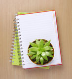 Top view of a Cactus on Booklet Stock Image