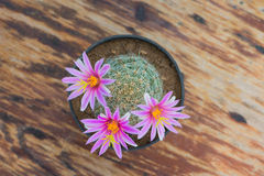 Top view of cactus with pink flower in pot on wood table Royalty Free Stock Photo