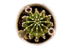 Cactus from above Royalty Free Stock Photo