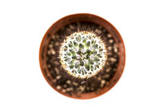 Cactus from above Royalty Free Stock Photography