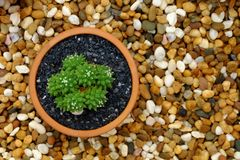 Top view of Cactus in terracotta pot on stone background. stock images