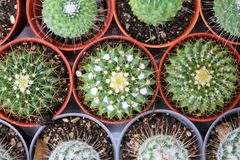 Top view of cactus plants Stock Photo