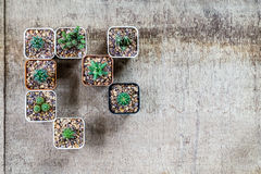 Top view of cactus in pots on grungy wooden background with copy Stock Photo