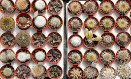 Top view of cactus and succulents Stock Photos