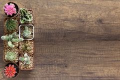 Top View Cactus and succulents in small flowerpots on wodden background stock image