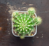 Top view of a cactus on wood table Stock Photography