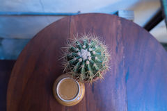 Top view of a Cactus Royalty Free Stock Images