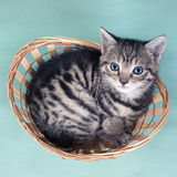 Top view of a cat  in a basket Stock Photos