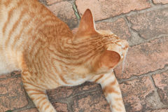 Top view  of cat on brick floor background. Kitten Royalty Free Stock Images
