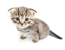 Top view of cat kitten Royalty Free Stock Photos
