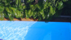 Top view of clean water surface in swimming pool and palm trees, sun shine bright water-pool loop background Royalty Free Stock Images