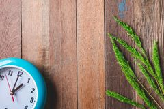 Top view of  Clock with green paddy rice on wooden table. Background. Free space for text Royalty Free Stock Photos