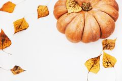 Top view close up Autumn pumpkin on white table with dry fall au. Tumnal ash leaves ,copy space Stock Images