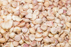 Top view of close up of garlic Stock Images