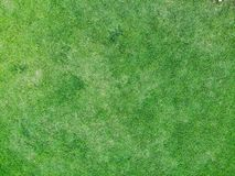 Top view and close up of green grass texture background royalty free stock images