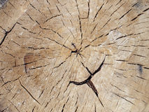 Top view close up on an old tree stump. With cracks Royalty Free Stock Photo