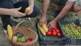 Top view of a close-up shot of a wicker basket with ripe seasonal fruits and vegetables from your own garden without. Chemicals and pesticides. Farmers are stock video footage