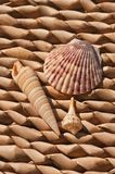 Three tropical shells displayed on a grass weaved place mat royalty free stock photo