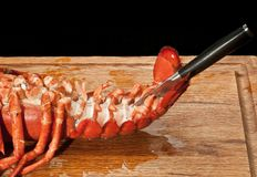 Steamed lobster tail being cut open on abdominal shell. Top view, close up of a two and a half pound, steamed lobster tail being cut open on abdominal shell with stock photography