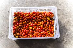 Top view closeup detail of red cherry tomatoes in open plastic transparent packaging container royalty free stock photo