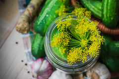 Top view closeup jar pickles other ingredients pickling Royalty Free Stock Photography