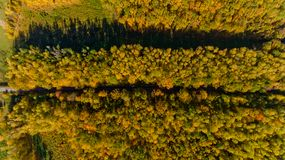 Top view of the colorful autumn forest. Aerial view. Top view of the colorful autumn forest Royalty Free Stock Photos