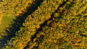 Top view of the colorful autumn forest. Aerial view Stock Photography