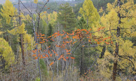 Top view of colorful autumn forest. On a cloudy day Stock Photos