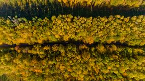 Top view of the colorful autumn forest. Aerial view Royalty Free Stock Images