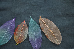 Top View of Colorful Dried Leaves Stock Images