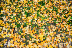 Top view colorful fall leaves on green grass as background. Top view colorful fall leaves on a background of green grass Stock Photo