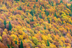 Top view of colorful forest trees in the autumn Stock Photo