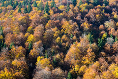 Top view of colourful forest trees in the autumn Royalty Free Stock Photo