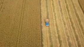 Top view combine harvester pours out wheat into the truck at sunset. Harvesting grain field, crop season. Beautiful natural aerial landscape stock video
