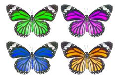 Top view of common tiger butterfly & x28; Danaus genutia & x29; on white. With clipping path stock photography