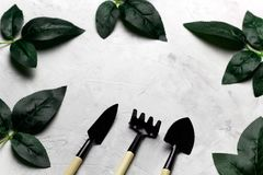 Rose leaves and garden tools frame, spring gardening concept. Top view concrete background with rose leaves and garden tools frame, spring gardening concept Royalty Free Stock Image