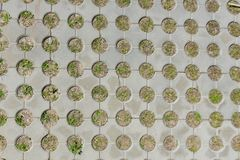 Top view of concrete pavement with growing grass inside. Background texture stock photography