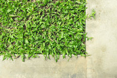 Top view contrast cement walk path and grass land Stock Photo