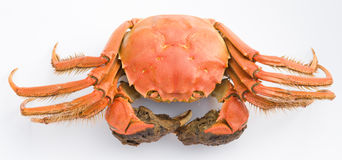 Top view cooked crab Stock Images