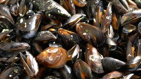 Top view cooked sea mussels rotating background stock video footage