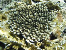Top view on coral at red sea Royalty Free Stock Photography