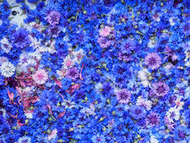Top view cornflower. Top view blue cornflower basket background texture Royalty Free Stock Images