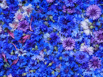 Top view cornflower. Top view blue cornflower basket background texture Royalty Free Stock Photos