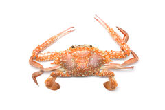 Top view of crab on white background Royalty Free Stock Photos